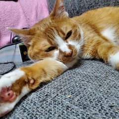 猫のいる暮らし/猫と暮らす 茶↔️モカ7歳これからも元気にすごそーね…