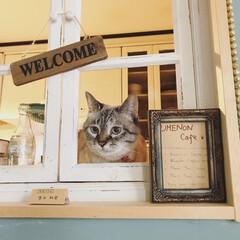 猫が好き/猫のいる暮らし/ウメノン珈琲/保護猫/保護猫出身 ウメノンカフェの店番は、ウメ社長。 いら…
