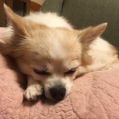 おやすみショット 😴