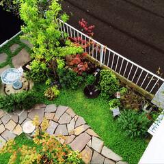 ディゴンドラ/ガーデンエクステリア/ナチュラルガーデン/お庭リフォーム/ミドラス/ガーデン/... 見事にディゴンドラが芽吹き、土だった部分…