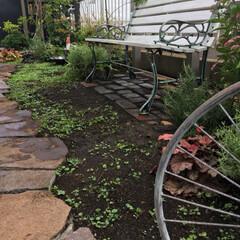 石畳/レンガ敷き/庭仕事/お庭のリフォーム/ナチュラルガーデン/至福のひととき/... 久しぶりの庭仕事 余っていたレンガをベン…(3枚目)