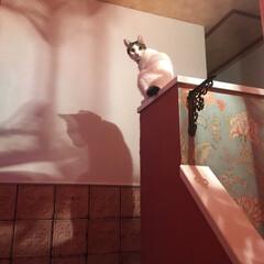 窓DIY/セルフペイント/漆喰壁にリフォーム/輸入壁紙/モロッコ風/猫家族/... 何処にいるのかな? と思いきや こんな所…