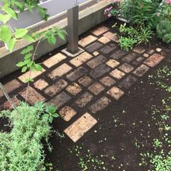 石畳/レンガ敷き/庭仕事/お庭のリフォーム/ナチュラルガーデン/至福のひととき/... 久しぶりの庭仕事 余っていたレンガをベン…(2枚目)