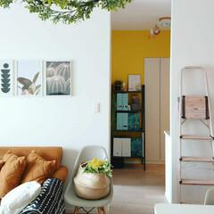 模様替え/リビング/マンション暮らし/マンションインテリア/グリーンのある風景/フェイクグリーン/... 我が家の黄色の壁 フェイクのミモザもバス…