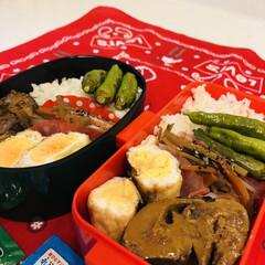 シシトウ/きんぴら/鯖缶/ご飯/お弁当/LIMIAごはんクラブ 今日のお弁当  サバの味噌煮(缶詰) 巾…