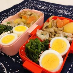 お弁当/焼売/ナムル/ピーマン/玉ねぎ/人参/... 今日のお弁当  肉じゃが ゆで卵 ピーマ…