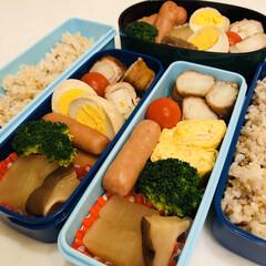 ポン酢/豚肉/白菜/大根/卵焼き/ゆで卵/... 今日のお弁当  白菜の肉巻き ウインナー…