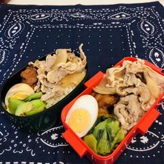 お弁当/みんなのお弁当 今日のお弁当  豚肉と大根のオイスターソ…