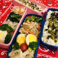 お弁当/料理/手作り/作り置き/わたしのごはん 今日のお弁当  生姜焼き ほうれん草のお…