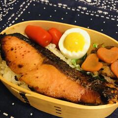 シャケ/ミニトマト/蓮根のきんぴら/ゆで卵/お弁当/LIMIAごはんクラブ/... 今日のお弁当  鮭 ゆで卵 蓮根のきんぴ…