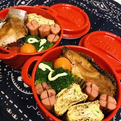 お弁当/手作り/料理/作り置き/わたしのごはん 今日のお弁当  赤魚煮付け 卵焼き ウイ…