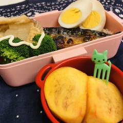 おうちごはんクラブ/LIMIAごはんクラブ/ランチ/お弁当/娘弁当/ゆで卵/... 今日のお弁当  焼き鯖 ブロッコリー 大…