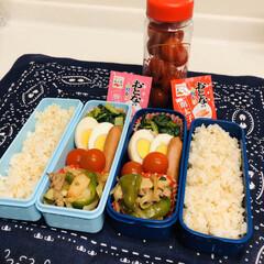 小松菜/ウインナー/野菜炒め/ゆで卵/ミニトマト/娘弁当/... 今日のお弁当  ウインナー 野菜炒め 味…
