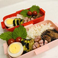 ズッキーニ/にんにく/鯖/鯖缶/娘弁当/おうちごはんクラブ/... 今日のお弁当  鯖味噌煮(鯖缶) 味たま…