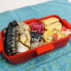 娘弁当/お弁当/卵焼き/鯖/マカロニ/甘酢/... 今日のお弁当  塩鯖 卵焼き マカロニサ…