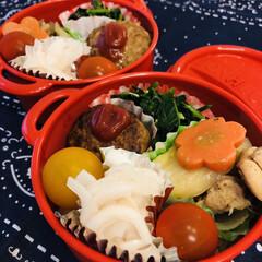 ボヌール/玉ねぎ/人参/ジャガイモ/ほうれん草/ハンバーグ/... 今日のお弁当  肉じゃが ハンバーグ ミ…