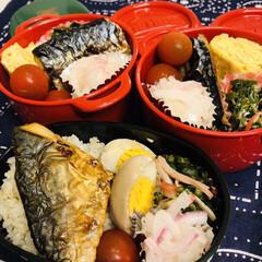 ボヌール/ミニトマト/鯖/カニカマ/おかひじき/ゆで卵/... 今日のお弁当  焼き鯖 玉子焼き、味付け…