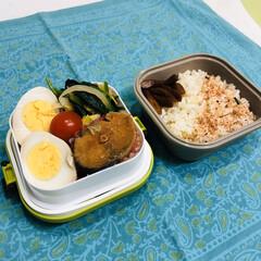 白菜/ほうれん草/鯖/山ごぼう/娘弁当/ミニトマト/... 今日のお弁当  鯖の味噌煮(缶詰) 味付…