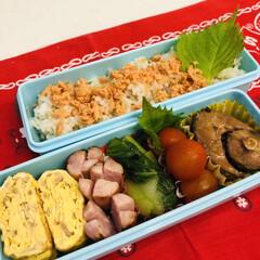 手作り/娘弁当/ミニトマト/卵焼き/青梗菜/鯖/... 今日のお弁当  鯖の味噌煮(缶詰) ウイ…