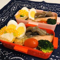 こんにゃく/カブ/ゆで卵/鮭/ブロッコリー/ミニトマト/... 今日のお弁当  鮭 味付きたまご こんに…