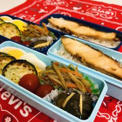 娘弁当/キュウリ/ズッキーニ/ゴボウ/シャケ/ミニトマト/... 今日のお弁当  家庭菜園で 大量にキュウ…