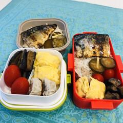 娘弁当/茄子/卵焼き/鯖/焼売/ミニトマト/... 今日のお弁当  鯖 卵焼き ミニトマト …