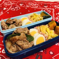 娘弁当/生姜焼き/キャベツ/ゆで卵/カボチャ/お弁当/... 今日のお弁当  生姜焼き ゆで卵 キャベ…