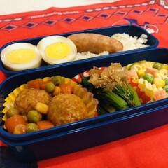 ランチ/ウインナー/ゆで卵/肉団子/ミックスベジタブル/マカロニ/... 今日のお弁当  肉団子のトマトジュース煮…