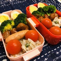 冬休み/おうちごはんクラブ/LIMIAごはんクラブ/娘弁当/ゆで卵/ミニトマト/... 今日のお弁当  ミートボール 味付きたま…