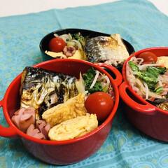 娘弁当/自分弁当/ウインナー/鯖/卵焼き/青梗菜/... 今日のお弁当  鯖の塩焼き 卵焼き ミニ…