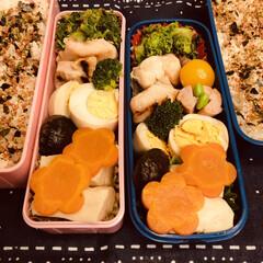 お弁当/作り置き/手作り/料理/わたしのごはん 今日のお弁当  鶏照り焼き 高野豆腐 煮…