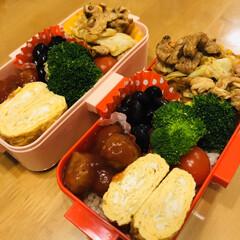 黒豆/赤味噌/玉ねぎ/豚肉/キャベツ/卵焼き/... 今日のお弁当  回鍋肉 ミートボール 卵…