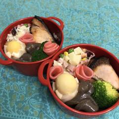 お弁当/料理/作り置き/手作り/わたしのごはん 今日のお弁当  ブリ照り焼き 味付き玉子…