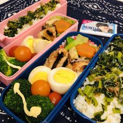 お弁当/料理/作り置き/手作り/わたしのごはん 今日のお弁当  鶏照り焼き 煮卵 青梗菜…