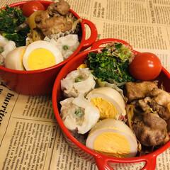 お弁当/料理/作り置き/手作り/わたしのごはん 今日のお弁当