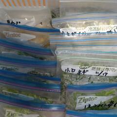 チンゲン菜/ほうれん草/小松菜/長ネギ/フリーザーバッグ/冷凍野菜/... 冷凍庫の半分を埋め尽くす義理の実家からの…