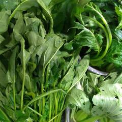 チンゲン菜/ほうれん草/小松菜/フード 小分け冷凍頑張ります……🙄