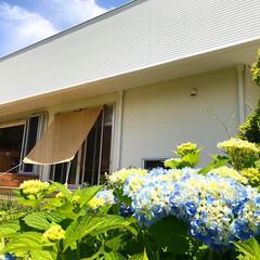 すだれシェード/DCM/令和元年フォト投稿キャンペーン/令和の一枚/LIMIAファンクラブ/風景/... 我が家の紫陽花も咲き出しました♪