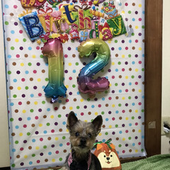 誕生日 今年も誕生日を祝う事が出来ました😄12歳…(1枚目)