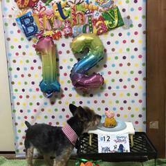 誕生日 今年も誕生日を祝う事が出来ました😄12歳…(6枚目)