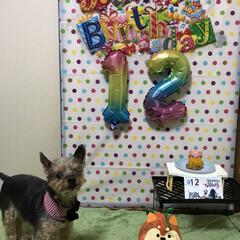 誕生日 今年も誕生日を祝う事が出来ました😄12歳…(4枚目)