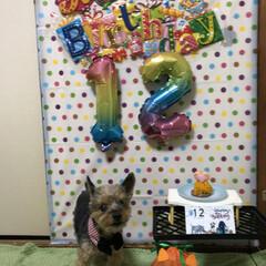 誕生日 今年も誕生日を祝う事が出来ました😄12歳…(5枚目)