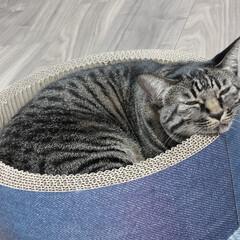 寝落ち/猫/キジトラ 寝落ち、三秒前 (2枚目)