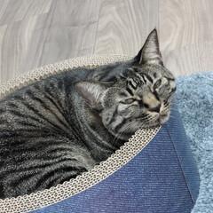 寝落ち/猫/キジトラ 寝落ち、三秒前 (1枚目)