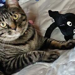 キジトラ/ニャンコ同好会/猫/ジジ 仕事から帰ると どこからか、ジジを見つけ…