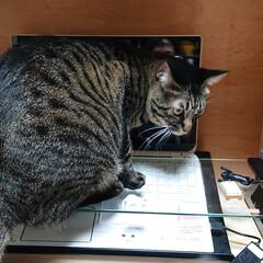 にゃんこ同好会/猫パソコン/キジトラ 猫ブロック‼️ の、目的でキーボードは、…(3枚目)
