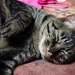 キジトラ/ニャンコ同好会 うたた寝して、目を開けると ミリーさんも…