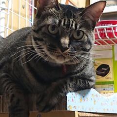 猫/イケメン/キジトラ なんだか 悩みがあるなら聞くよって感じで…(1枚目)
