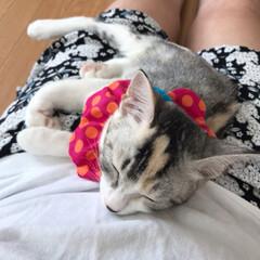 兄妹猫/生後4ヶ月/譲渡5日目/保護猫/猫 股のスペースが好き過ぎる