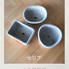 咲いてくれた/桔梗/切り戻し/庭/ゲット¨̮♡︎/サボテン/... 今日の植物☆  セリアでミニ盆栽鉢を見つ…